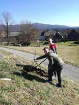 Zasaditev dreves